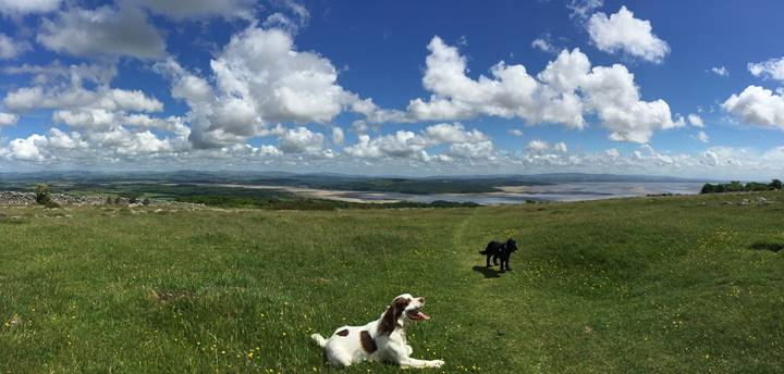 ハンプスフェルの丘より、今は亡き老犬フレディ(黒犬)と愛犬ジョーと一緒に