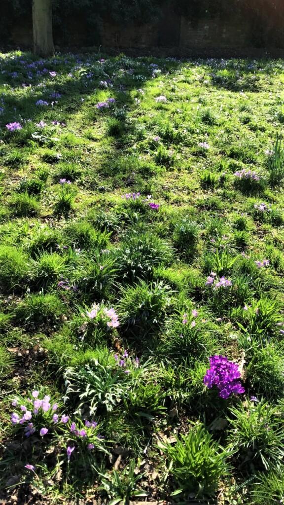イギリス田舎暮らし 春の訪れ