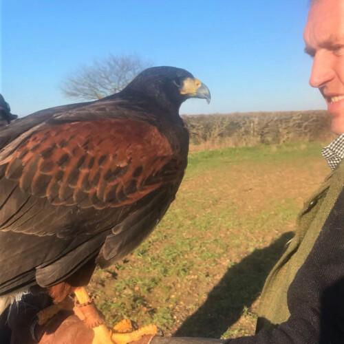 イギリス田舎暮らし 鷹を飛ばす人