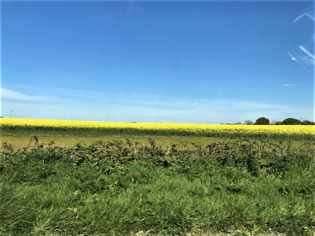 田舎暮らしの風景