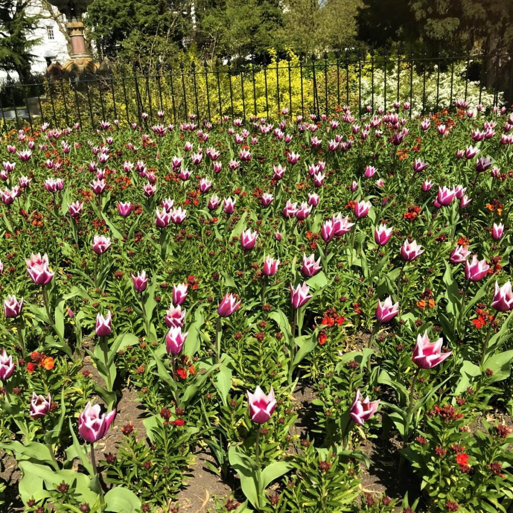 近所の花々