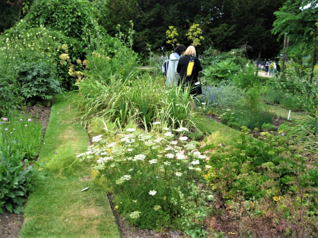 芝生の道と植物たち
