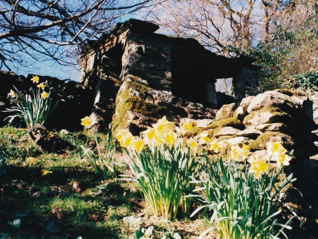 水仙とサマーハウス