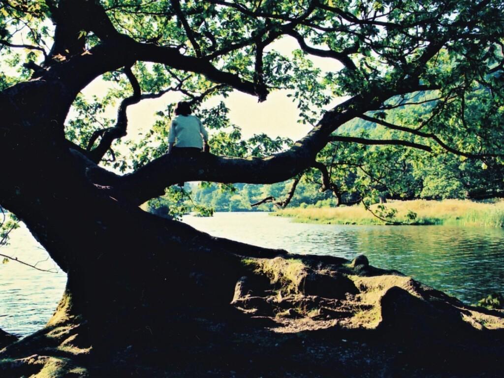 ライダル湖畔の大木