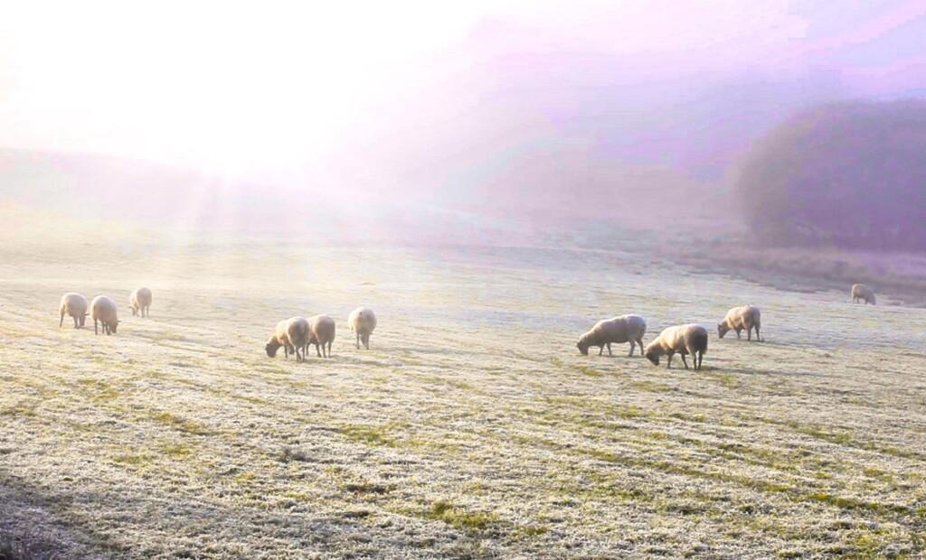 エスウェイト湖にかかる白い霧