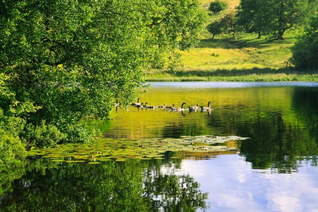 モス・エクルス湖