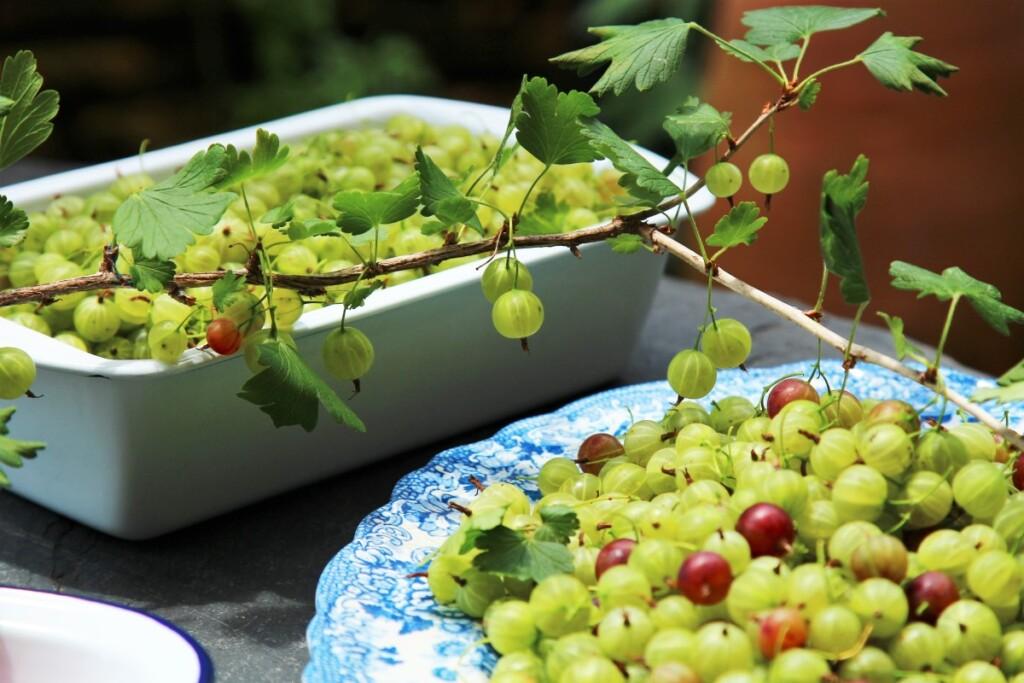薄緑色のグーズベリー