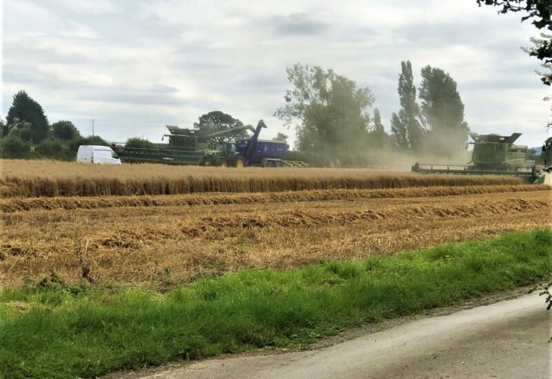 トラクターで麦の収穫