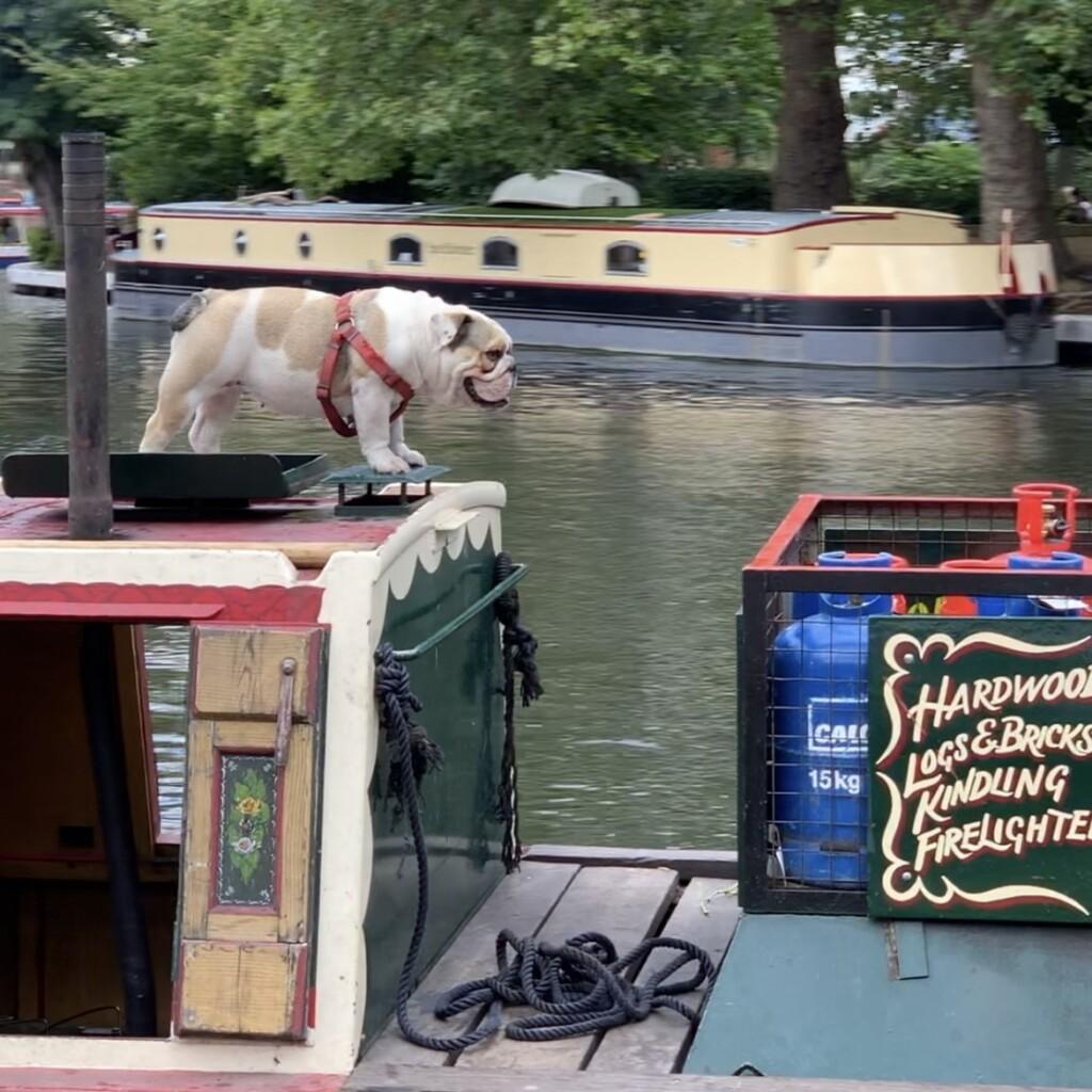 ボートの上のわんこ